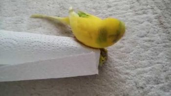 Parrot Apparently Mourning Dead Bird Is Adorably Sad