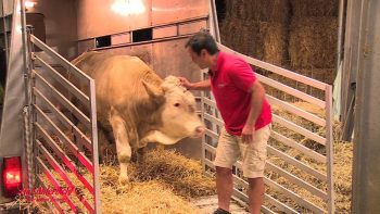 Cow Literally Dances For Joy And Shows Man Gratitude After Being Freed From Tiny Stable