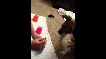 Dog Is Hilariously Bad At Find The Snack Under The Cup Game
