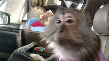 Monkey Loses Her Mind Riding Through Car Wash