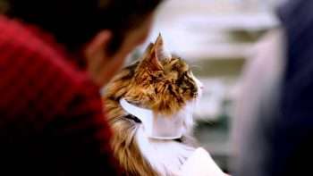 World's First Talking Cat Collar