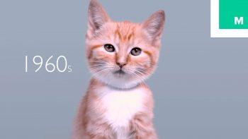100 Years Of Kitten Beauty