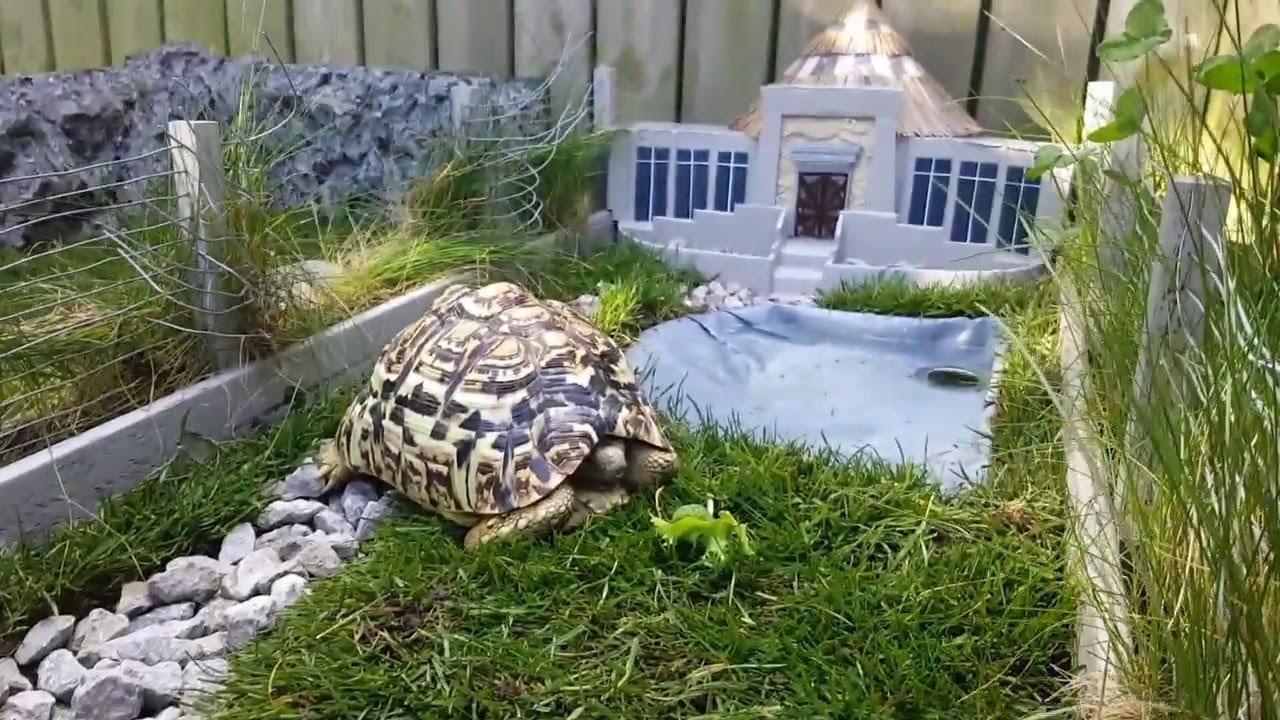 24 viral turtle videos in 2017 u0026 ever viral viral videos