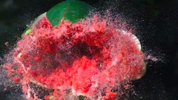 Shooting A Watermelon With A Potato Gun
