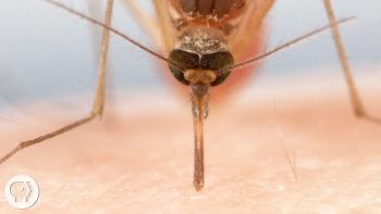 How Mosquitoes Suck Your Blood Is Beyond Disturbing