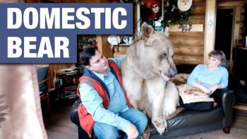 Russian Couple Live With Domesticated Bear