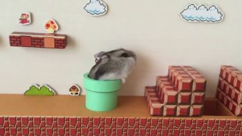 Hamster Takes On First Level Of Super Mario Brothers