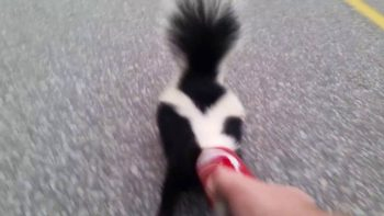 Rescuing a Skunk From a Coke Can