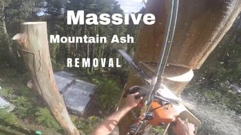 Epic Tree Removal POV in 150 Feet Height
