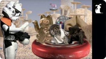 Paw Wars Star Wars Pet Parody