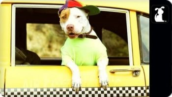 Fresh Pup Of Bel Air Parodies Fresh Prince Theme Song