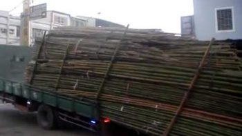 Unloading Bamboo Off Truck Taiwanese Style