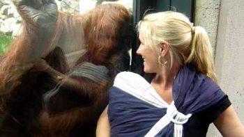 Orangutan Meets Baby