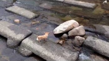 Dog Plays Fetch By Self Using Stream