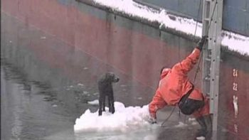 Russian Fisherman Saves Dog Stranded On Ice At Sea