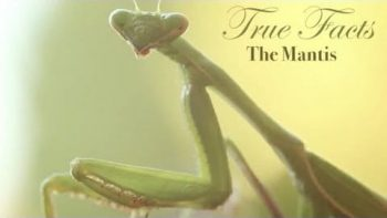 True Facts About The Praying Mantis