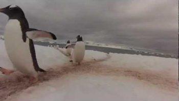 Penguin Highway in Antarctica