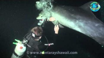 Divers Help Remove Fishing Wire From Dolphin