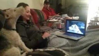 Dog Howls At Dog Video A La Skype