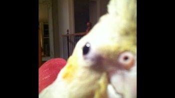Pet Bird Sings Dubstep