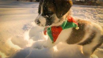 Puppy Snow Adventure