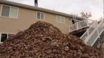 "Jumping From The Roof Into The ""World's Biggest Pile Of Leaves"""