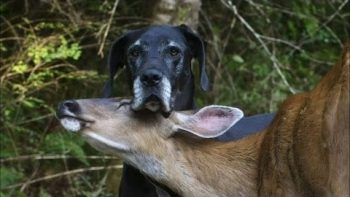 Dog And Deer Are Best Friends