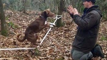 Acrobatic Dog Slacklining On Rope
