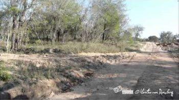Amazing Leopard Kill Caught On Camera