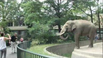 Elephant Throws Mud At Man At Berlin Zoo