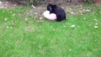 Bunny Loves Balloon