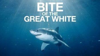 Shark Week Autotune Remix Tribute