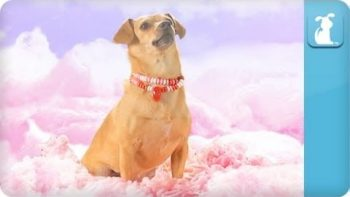 Dogs Cover California Gurls Music Video
