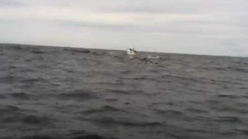 Amazing Whale Breach Close Up Off Coast Of Tofino