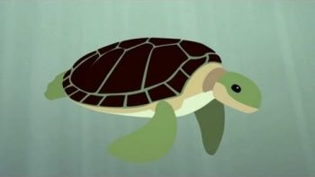 The Survival Of The Sea Turtle Animation