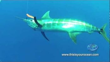 Massive Mako Shark Surprises Diver