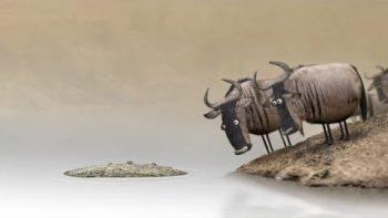 Wildebeest Funny Cartoon