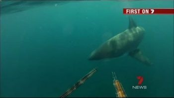 Two Australian Divers Have Close Call With Great White Shark