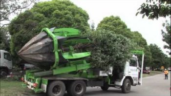 Tree Relocation In Australia