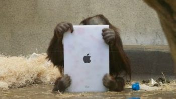 Orangutans Use iPad At Miami Zoo To Choose Their Own Lunch