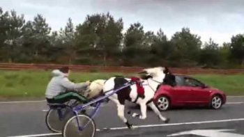 Illegal Horse Race On Ireland Highway