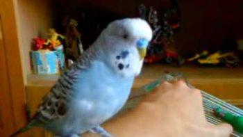 Bird Imitates R2-D2