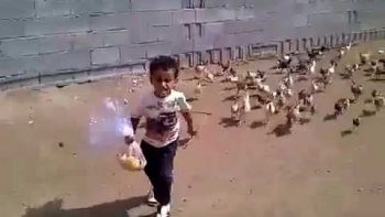 Little Boy Chased By Hungry Chickens