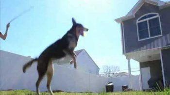 Double Dutch Jump Rope Dog