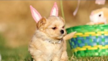 Puppy Easter