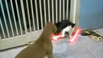 Jedi Cat Battles Dogs