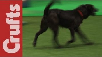 Dog Poops In Middle Of Competition Run On Live TV