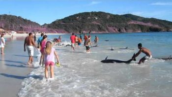 Brazilians Save Pod Of Beached Dolphins