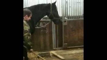 Horse Helps Sweep The Stable