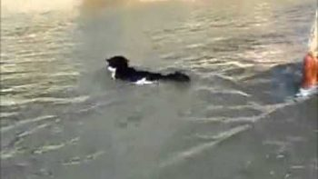 Russian Cat Goes Swimming